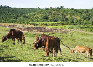 Cows on the grass field