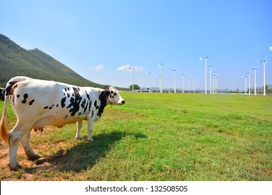Cows on Green Fields and Wind Turbines