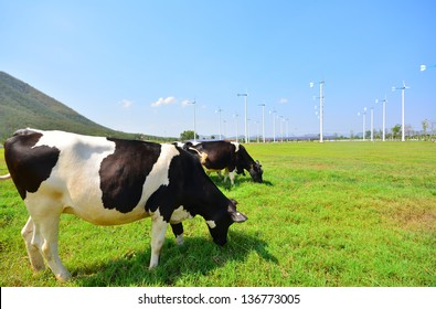 Cows on Green Meadow and Wind Turbines