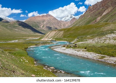 Cows pasturing near turquoise river, Tien Shan, Kyrgyzstan