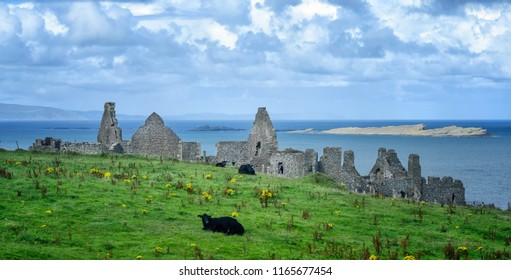Cows sit in a pasture in front of Dunluce Castle,  a now-ruined medieval castle in Northern Ireland