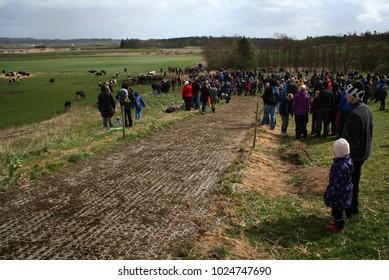 The cows spring festival in Silkeborg, Denmark 2015.