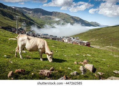 cows and Summer mountains in Andorra La Vella, Europe