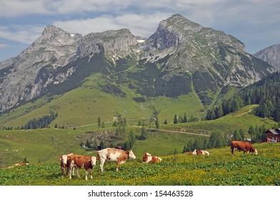 Cows at Tennengebirge, Austria
