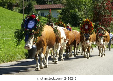"""Cows walking with decoration in the parade called """"Almabtrieb"""" in Austria"""