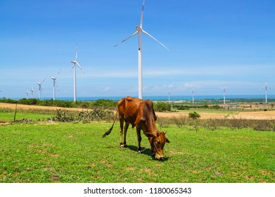 Cows and wind turbine on farm landscape in Binh Thuan province, Vietnam