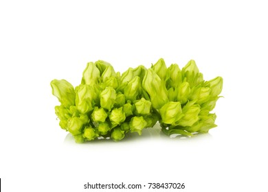 Cowslip creeper isolated on white background.
