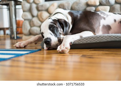 Cozy dog sleeping by fireplace on bamboo hardwood flooring, low angle sound asleep on bed.