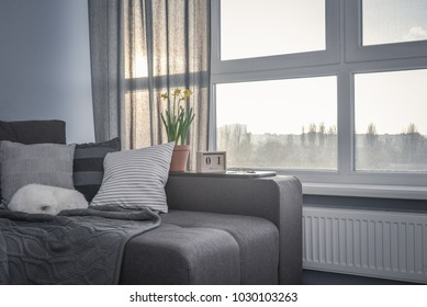 Cozy family room with brown couch, sleeping cat and large windows showing  spring landscape at sunny day