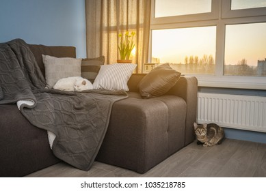 Cozy family room with brown couch, sleeping cat and large windows showing  winter landscape on sunset