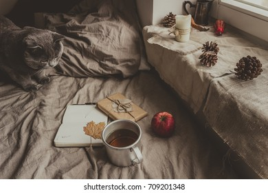 Cozy home in autumn. Gray cat, notepad,gift and cup of hot tea on soft bed.