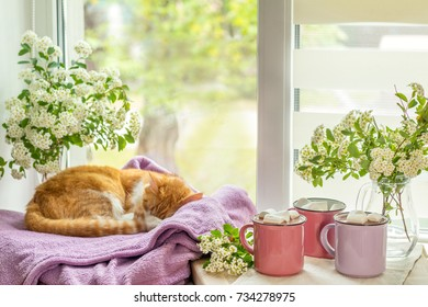 Cozy home concept.  Red-and-white cat is peacefully resting on the violet plaid at the white windowsill near the three pink cups with marshmallows on top of hot cocoa.