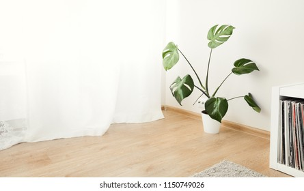 Cozy home interior with monstera palm plant, nobody