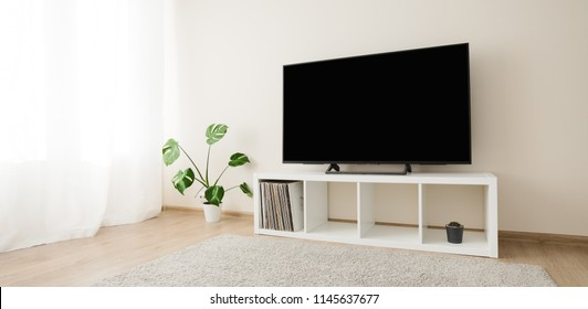 Cozy home interior with TV and monstera palm, nobody