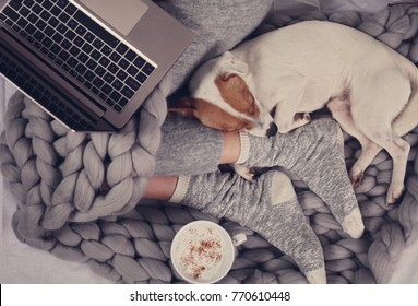 Cozy home, warm blanket, hot drink, movie night. Dog sleeping on female feet. Relax, carefree, comfort lifestyle.