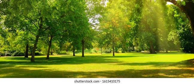 A cozy summer park with extensive lawns. Wide photo. - Shutterstock ID 1615410175