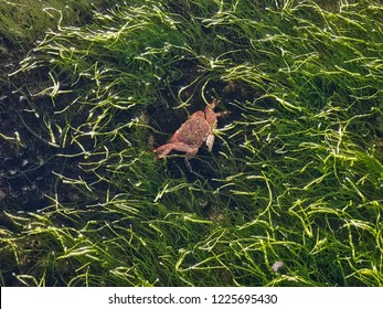 Crab alive in water, Bean Hollow State Beach, California, USA