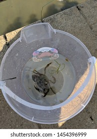 Crab in a bucket of water