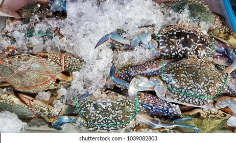 Crab called Portunus pelagicus. Sold in the market.