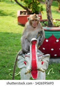 Crab Eating Macaque Monkey (Macaca fascicularis) near Monkey Temple (Phra Prang Sam Yot) in Lopburi, Thailand sitting on Ornamental Elephant.