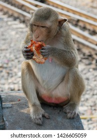 Crab Eating Macaque Monkey (Macaca fascicularis) near Monkey Temple (Phra Prang Sam Yot) in Lopburi, Thailand eating a piece of grilled chicken (Gai Yang) stolen from a street food vendor.
