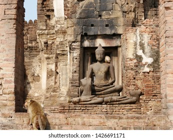 Crab Eating Macaque Monkey (Macaca fascicularis) near a statue of Buddha in the Monkey Temple (Phra Prang Sam Yot) in Lopburi, Thailand.