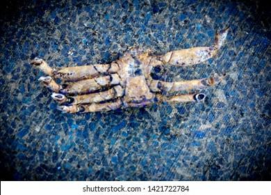 Crab Exoskeleton Abstract on Blue Mosaic