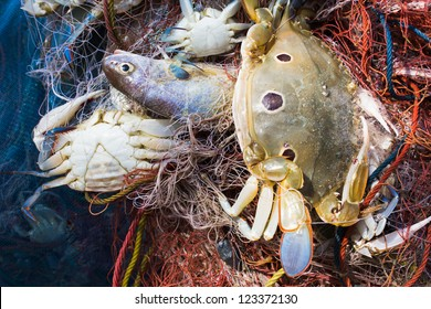 Crab and fish in a fishing nets