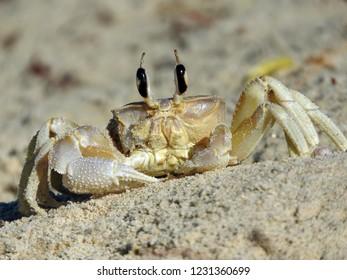 Crab found in Mannar Sri Lanka