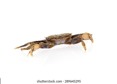 Crab isolated on a white background