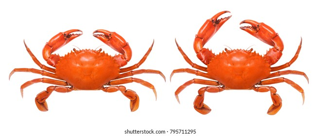 Crab isolated on white background. Fresh seafood.