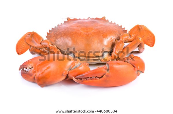 crab in isolated on white background