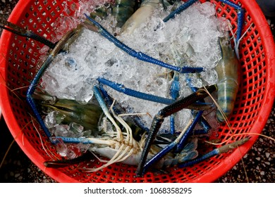 Crab legs sticking out from ice on display in a red colandar in a seafood market in Vietnam.