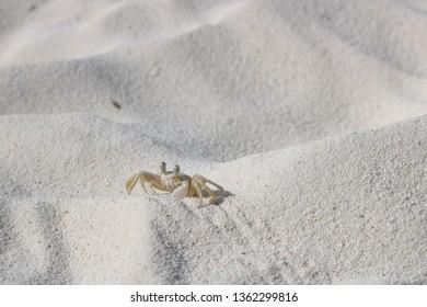 Crab Little Bonaire Beach