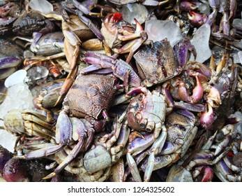 Crab at Mahachai market