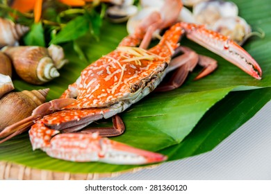 Crab on a background of shells and greenery. restaurant