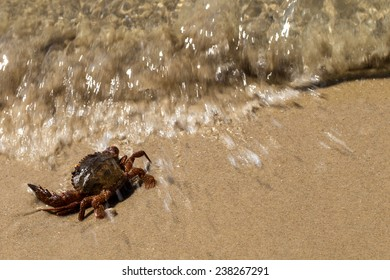 crab on beach with clean sand