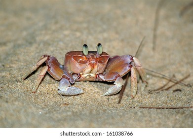 Crab on the beach / Small crab on the beach in Mozambique looks curiously into the lens