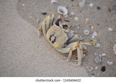 Crab on beach Thailand Khanom