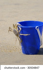 The crab on a bucket