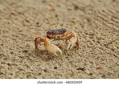crab on the sand beach