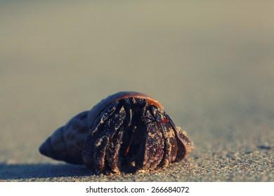 crab on sand beach coast
