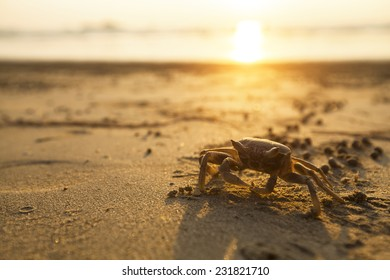 Crab on sand of the sea beach.