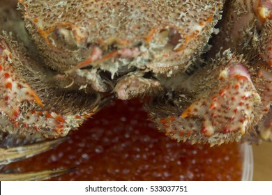 Crab on a table waiting for the fact that he will be eaten