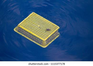 Crab and Plastic waste on the sea . plastic pollution.Envrionmental problem - plastics contaminate seafood
