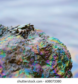 crab and rainbow reflection of crude oil spill on the stone at the beach, focus on crab