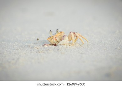 crab in the sand looking curious at viewer close up