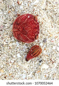 Crab shell and flower on the sand. High angle view.