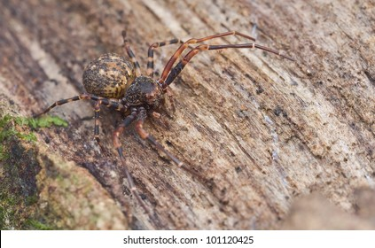 Crab spider on tree trunk