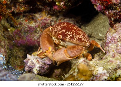 A crab tries to escape the photographer